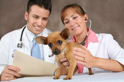 Veteriner Hekim İş, Çalışma Alanları